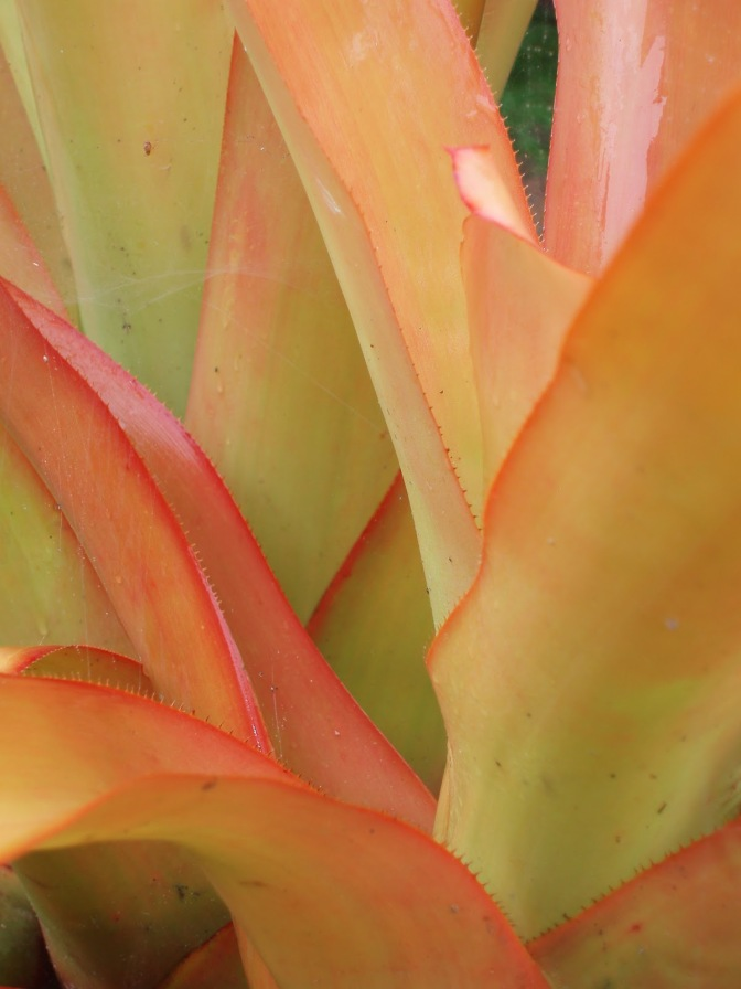 Caring for Bromeliads